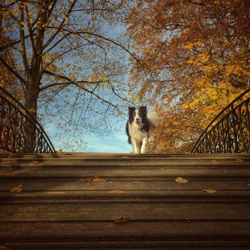 Honden fotograferen met je smartphone