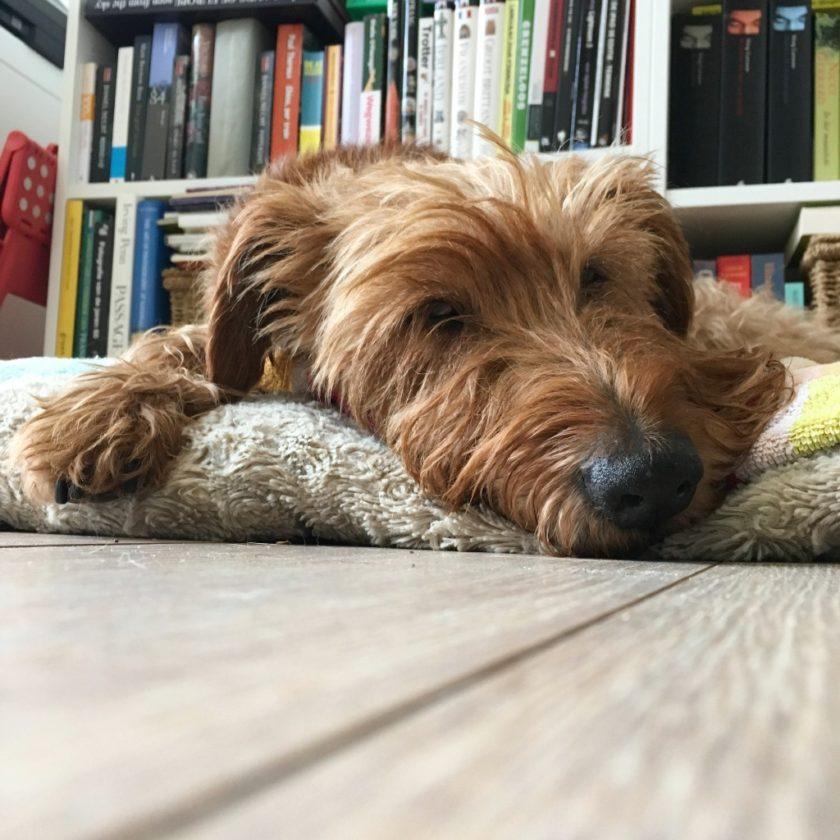 smartphonefotografie, hondenfotografie