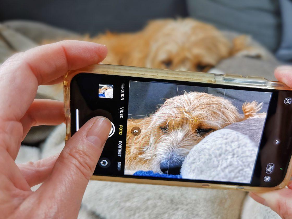 honden fotograferen