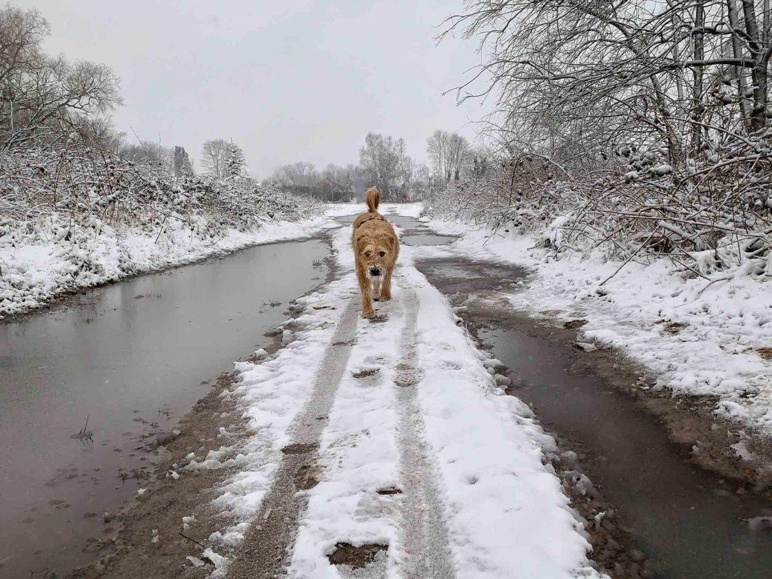 honden fotograferen in de sneeuw