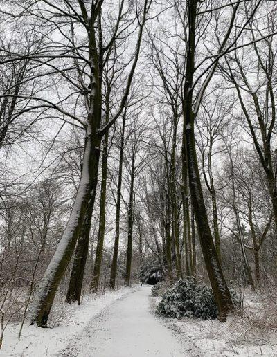sneeuwfoto