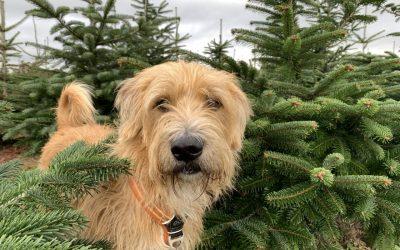Kerstkaarten maken van je hond