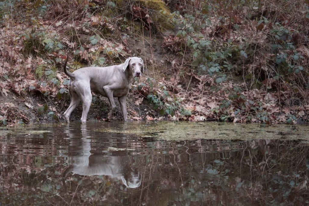 Hondenfotoshoot met Bo