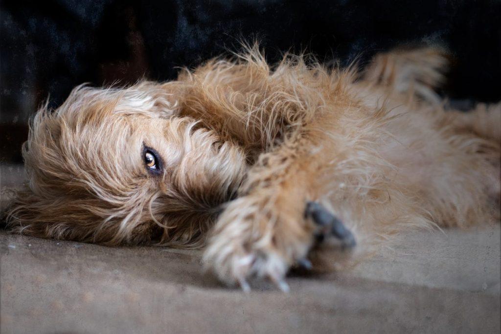 fotosessie hond