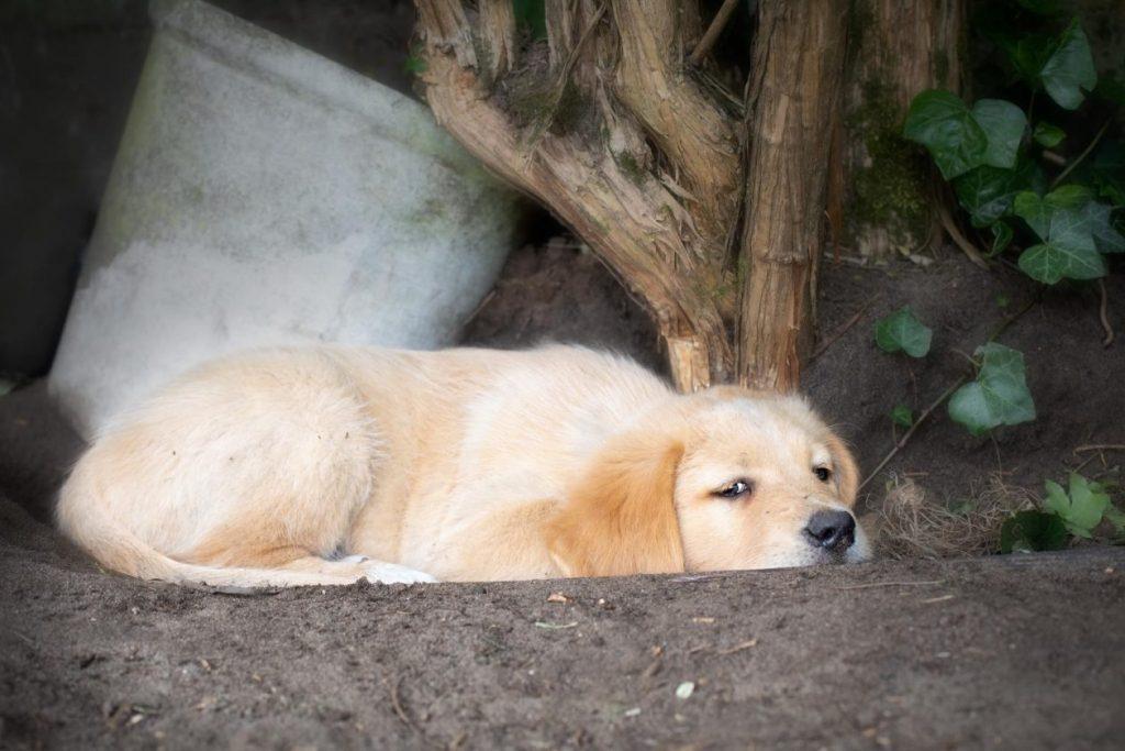 foto slapende pup