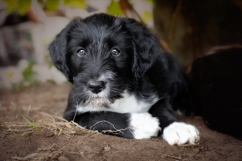 foto pup in tuin