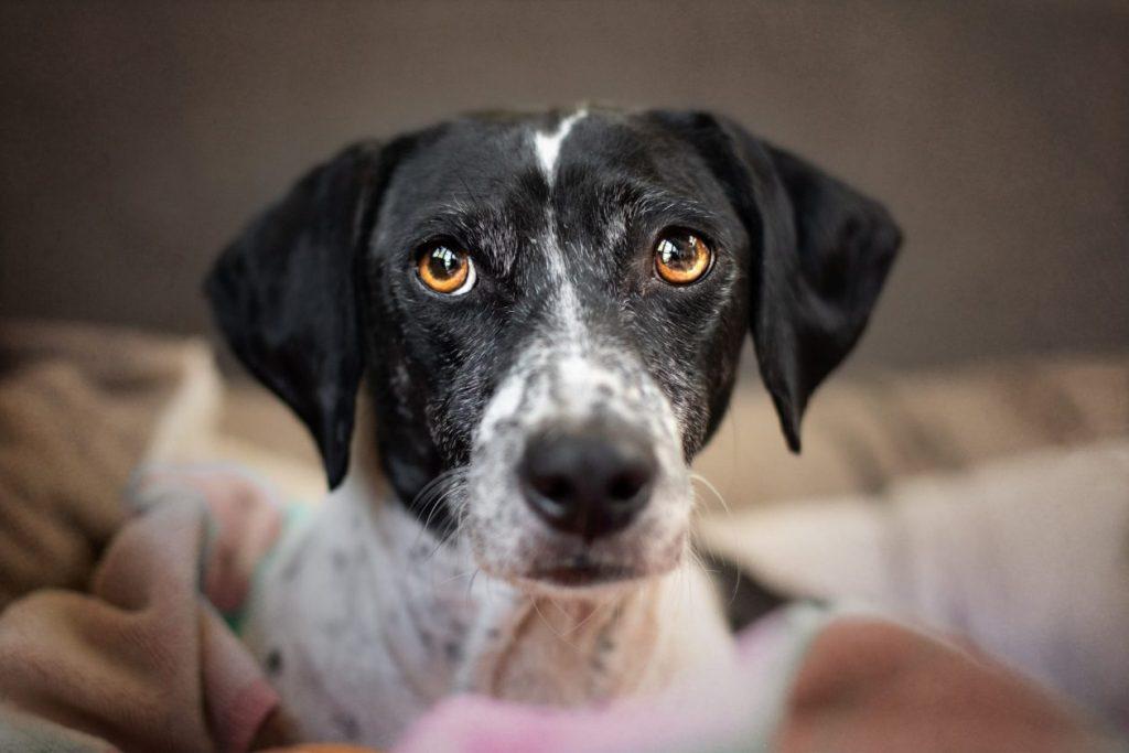 portret hondenhoofd