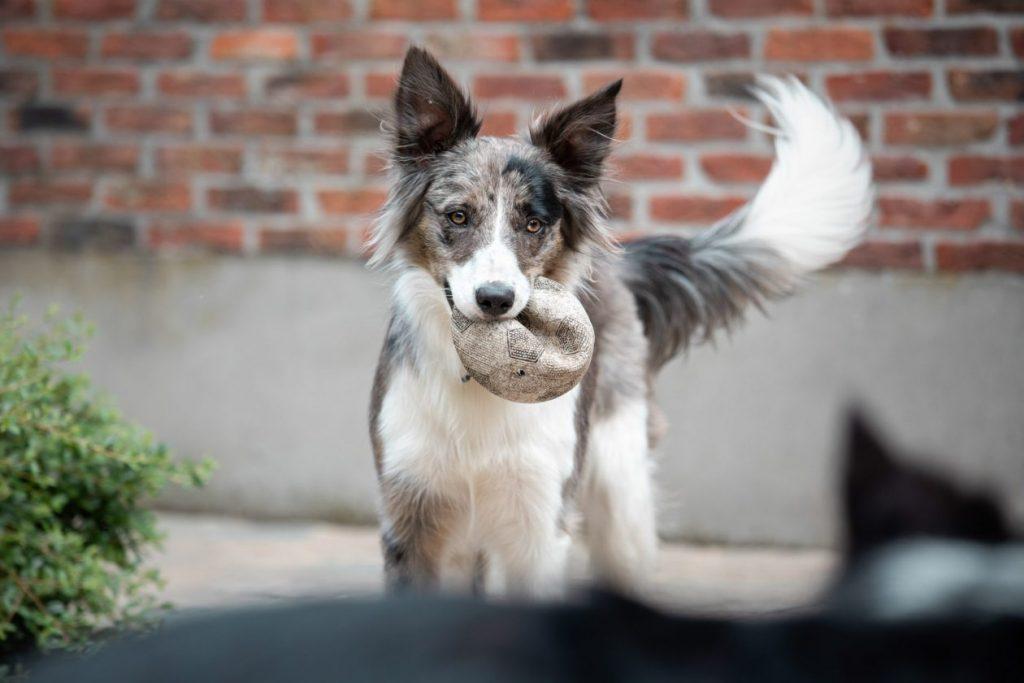 foto hond met bal