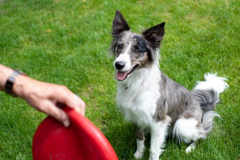 hond met frisbee