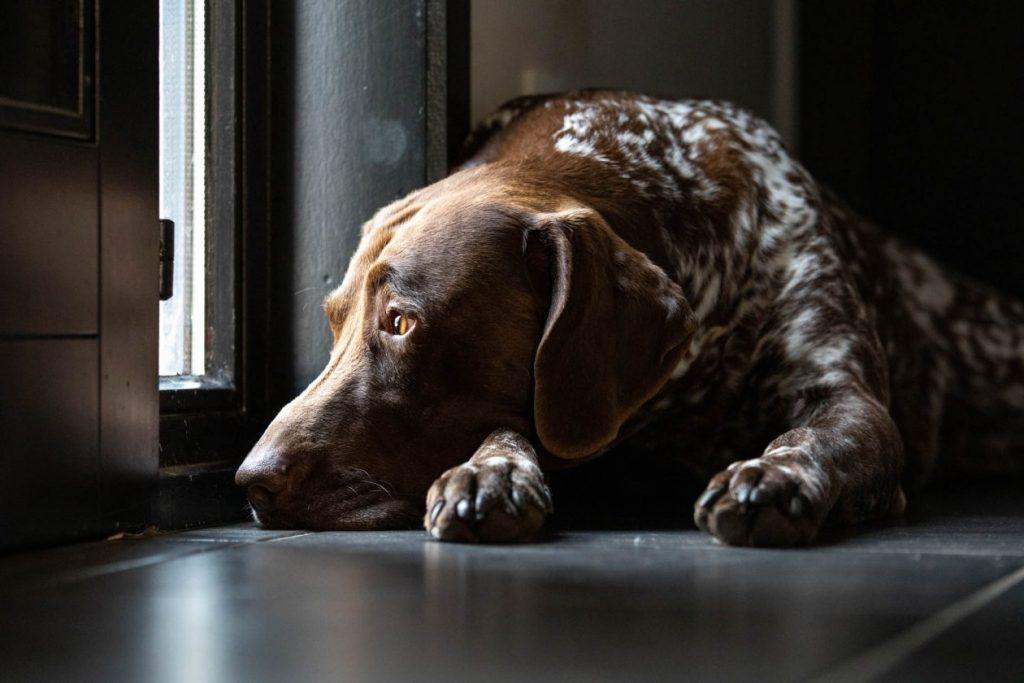 hond wachtend aan deur