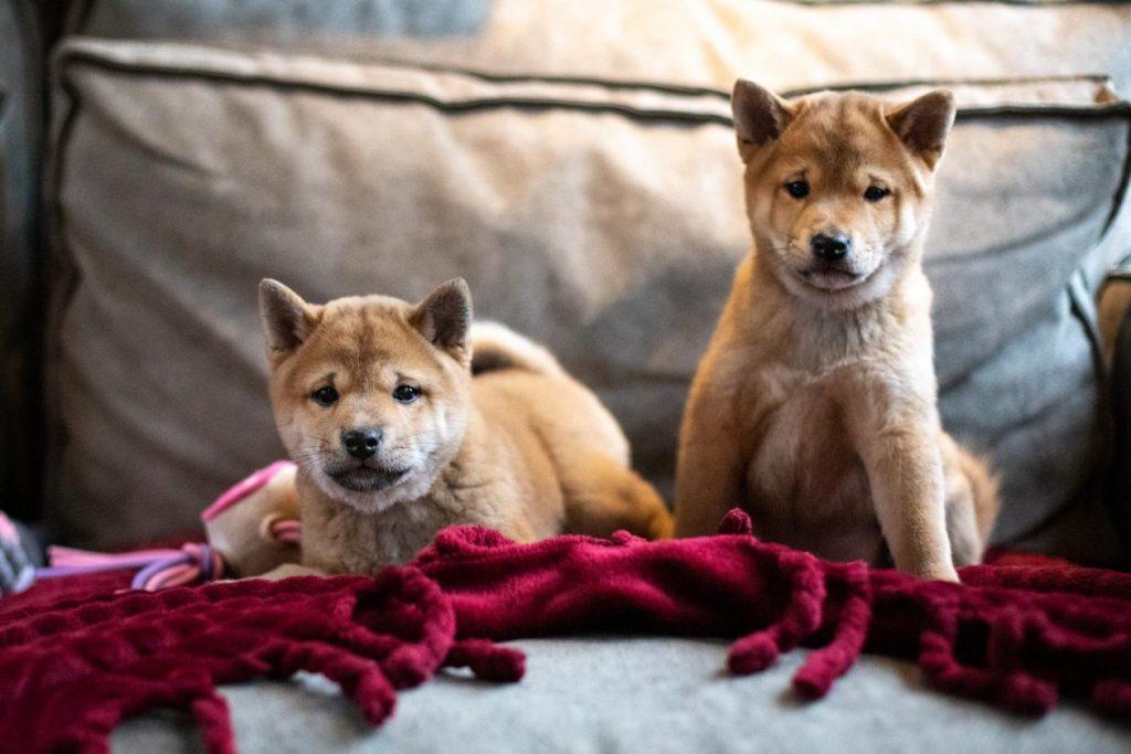 foto  pups