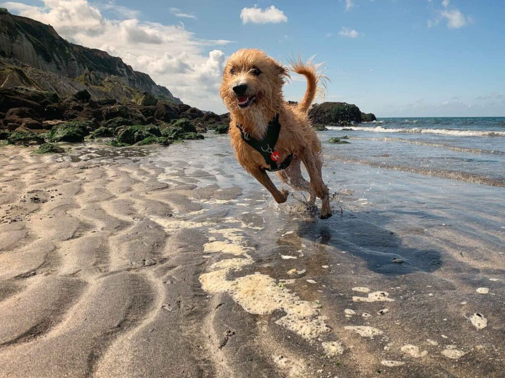 vakantiefoto's hond