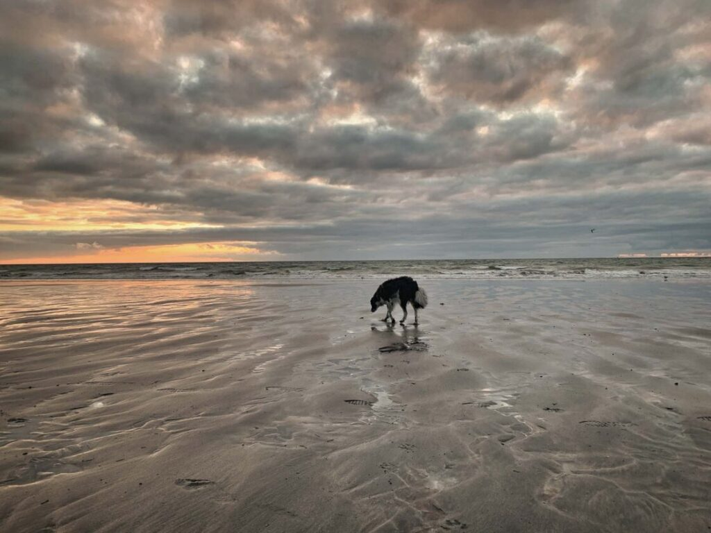 hond op strand bij zonsondergang