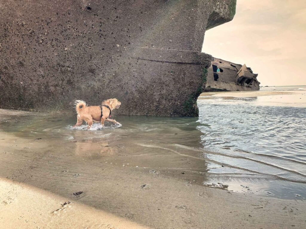 vakantie hond op strand