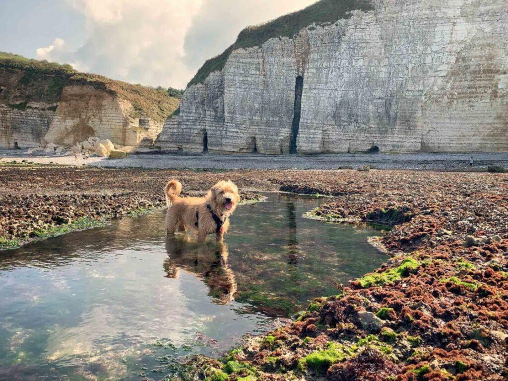 hond bij falaise
