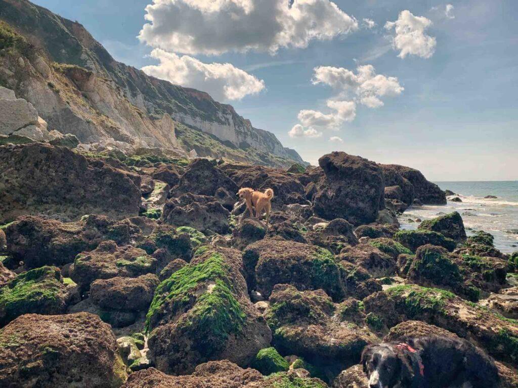hond aan strand Normandië