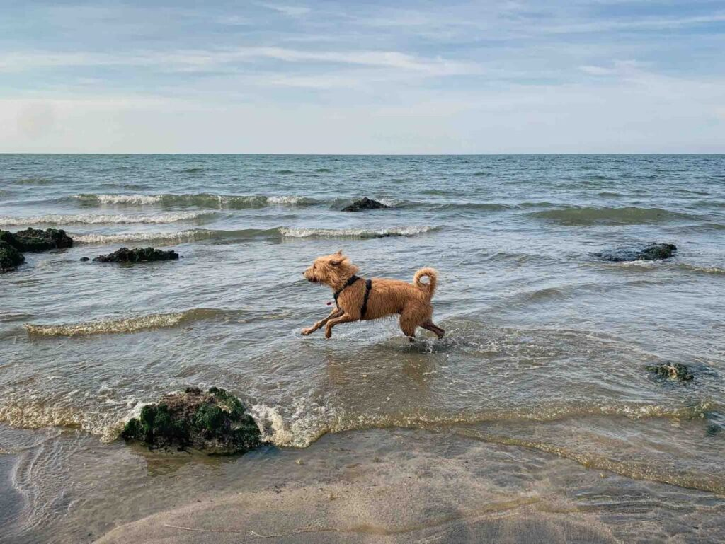 hond lopend op strand