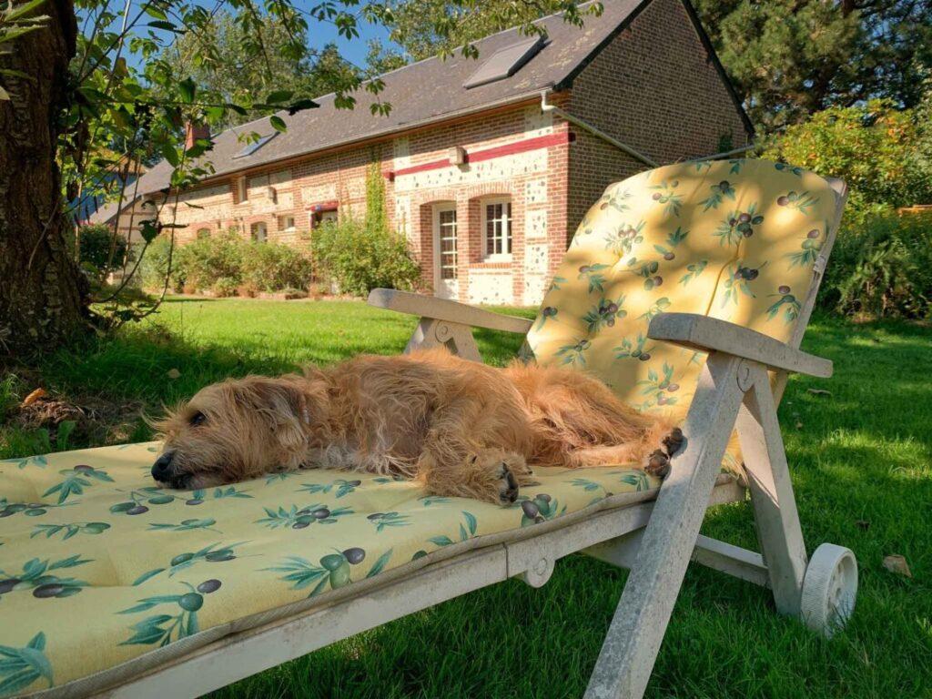 slapende hond op vakantie